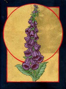 Digitalis purpurea (Roter Fingerhut), 18 x 24 cm, 2017