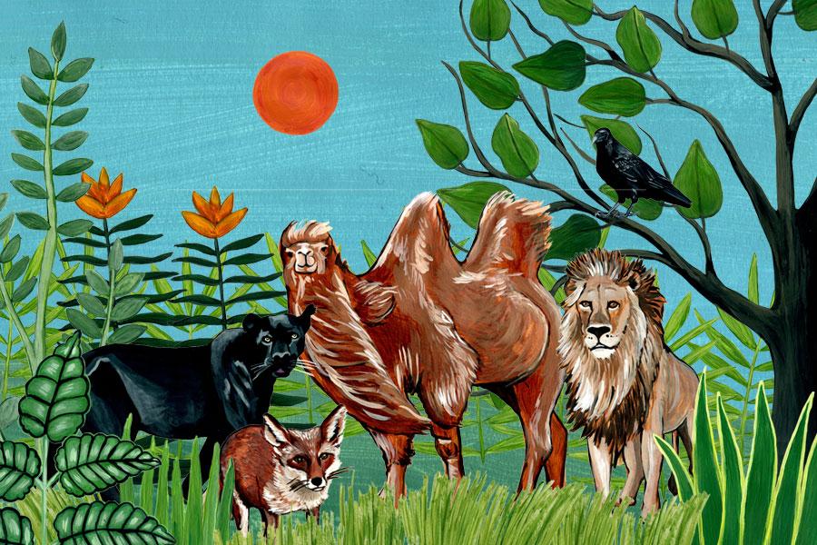 Tschitrakarna, das vornehme Kamel